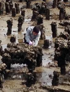 Bang Saen Laemtan shellfish
